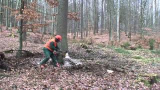 Praca w lesie - ścinka drzewa