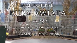 """Wystawa ,,Najpiękniejsze Kury Swiata"""" 2018r. cz.2"""