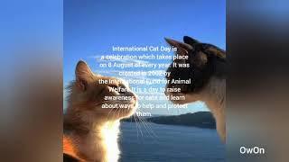 International Cat Day 🐈#InternationalCatDay