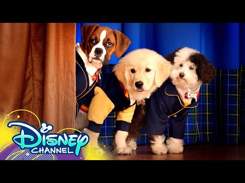 Theme Song 🎶 ft. Dakota Lotus | Pup Academy | Disney Channel
