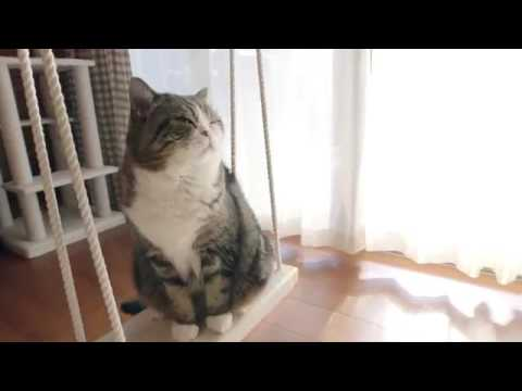 Maru   The cat from Japan that holds the record for most watched animal on YouTube