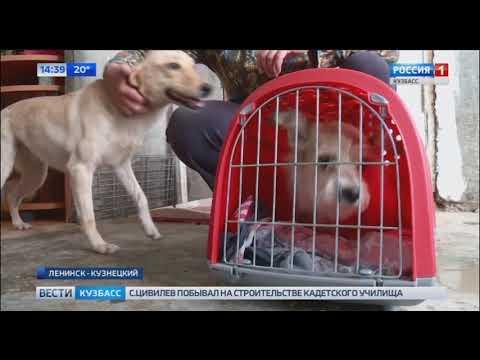 В Ленинске-Кузнецком в квартире без хозяина остались четыре собаки
