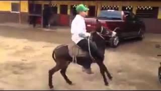 vuclip Horse dans