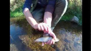Fliegenfischen auf Äsche im kleinen Bach (mit Unterwasserdrill)