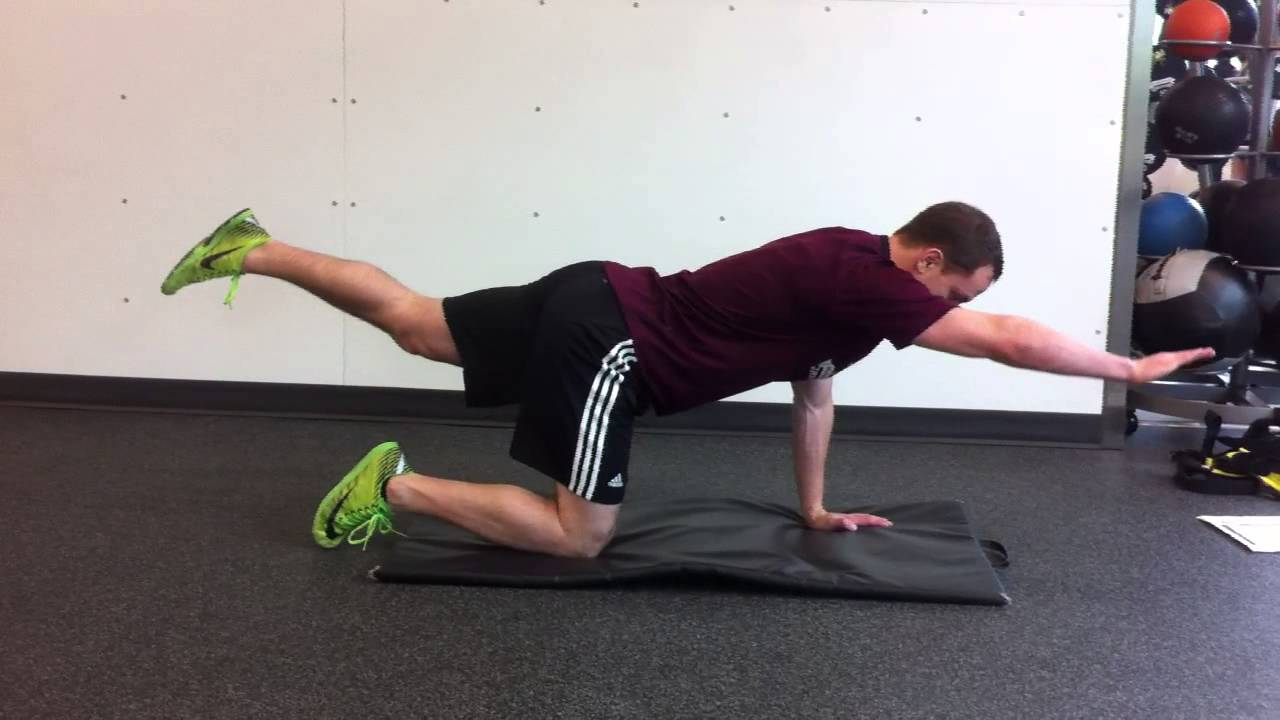 Quadruped Hip Extension Progression Youtube