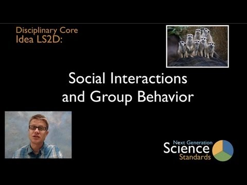LS2D - Social Interactions and Group Behavior