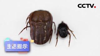 《生活提示》 20200812 虫咬伤真的会致命吗?| CCTV