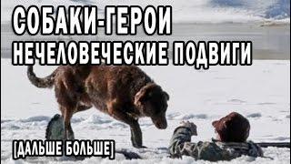 СОБАКИ ГЕРОИ! РАВНОДУШНЫМ НЕ СМОТРЕТЬ!!!