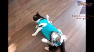Cats acting strange after vet visit - Cat video compilation