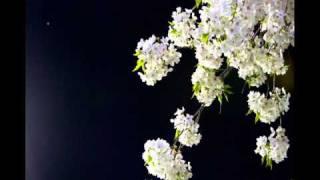 ENDLICHERI☆ENDLICHERI - ソメイヨシノ(カバー)を歌ってみた by Kui (906KK616)