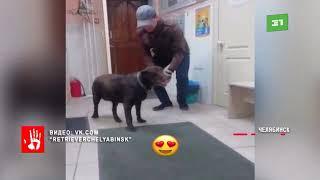 Собака спасатель, которая пропала 3 года назад – нашлась