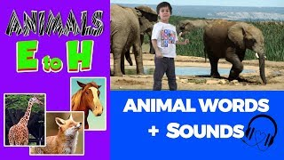 Animal words 🎧 sounds starting with EFGH | Animal Sounds and Words beginning with letters  E,F,G,H