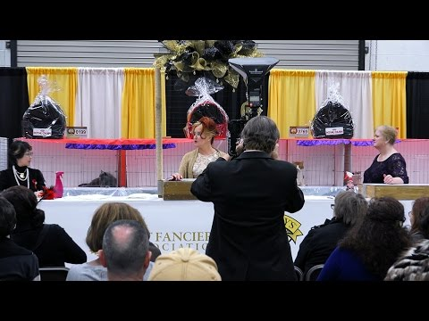 CFA International Cat Show 2015 - Best of the Best