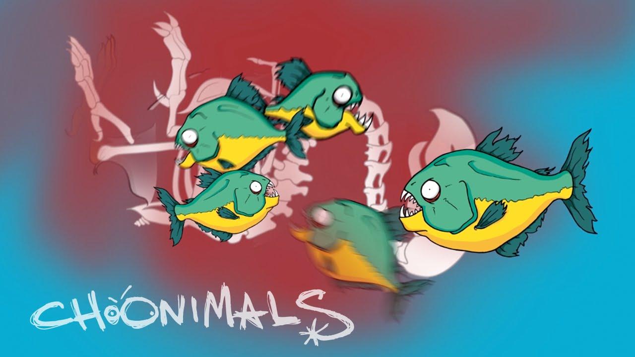 Piranha Facts From The Choonimal Kingdom