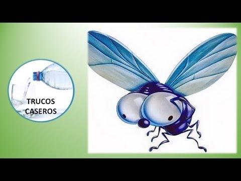 Remedios naturales contra las moscas doovi - Como matar las moscas de mi casa ...