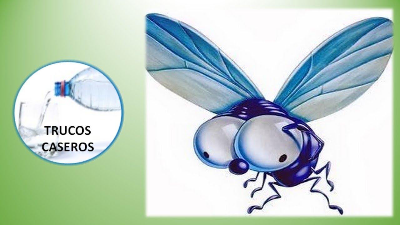 Como eliminar las moscas de tu casa con productos - Como sacar las moscas de la casa ...
