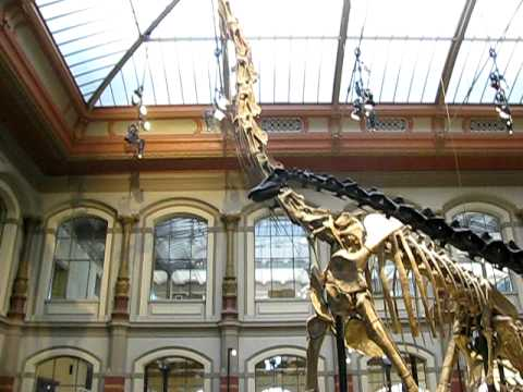 Sauropods at the Natural History Museum in Berlin