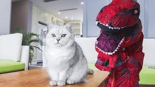 女主人扮恐龙把猫吓的到处飞,直接六亲不认,一脱衣服,猫:妈?