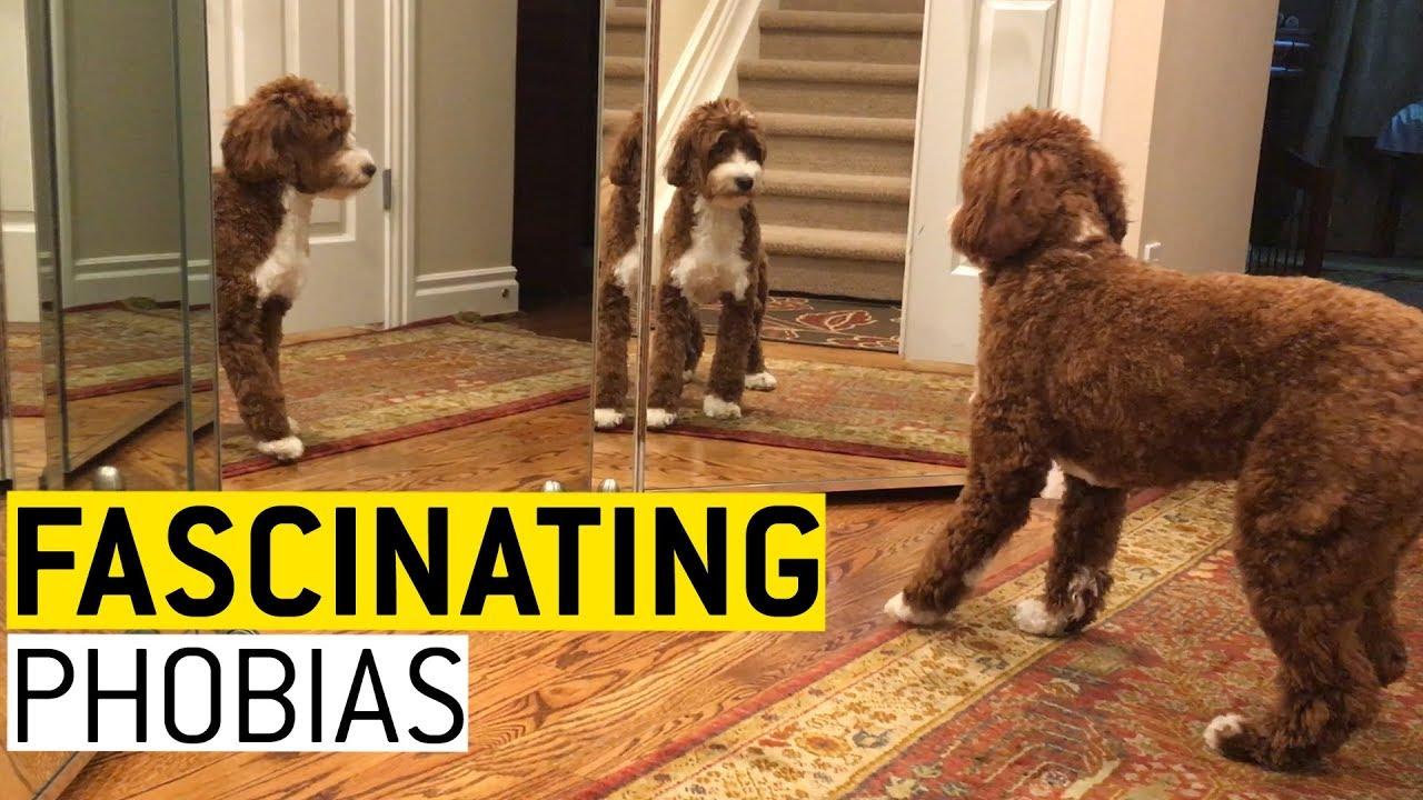Fascinating Phobias || JukinVideo