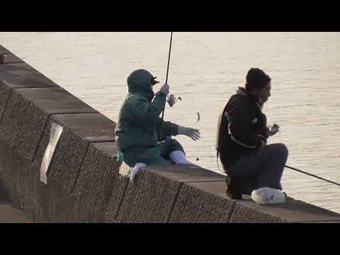 堤防からアジを釣る