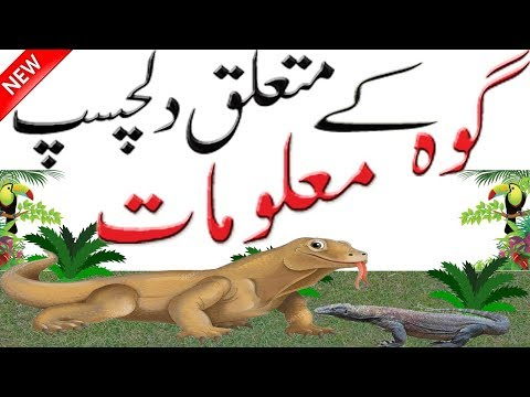 Interesting Facts About Lizards | Facts About Lizards | Facts About Animals | Hidden Secrets