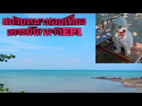สปายหมาชอบเที่ยว/เกาะมันกลาง ระยอง