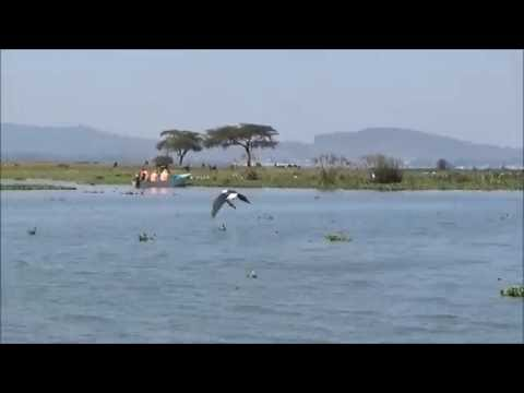 Lake Naivasha, Kenya ... Fish Eagle Taking A Fish