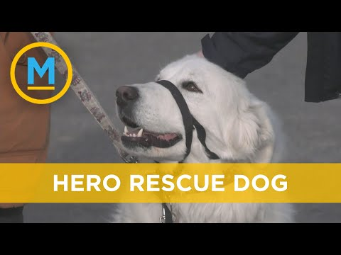Hero rescue dog saves owner after unexpected seizure   Your Morning