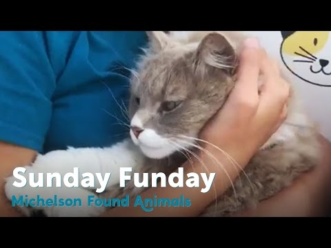 Cute Cats Lounging for Sunday Funday on the Cattywagon | MFA Live!