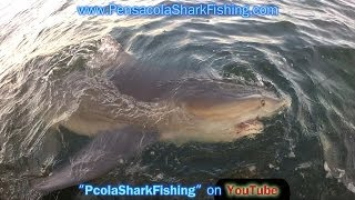 Bull Shark Fishing in the Gulf of Mexico