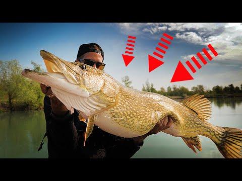 Le plus gros brochet jamais vu sur @Scarna Fishing !