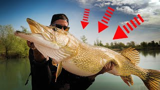 THE BIGGEST PIKE WE'VE EVER SEEN ! (18kg+)