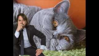 The biggest cat in the world?