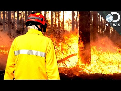 Are Fires Actually Good For Forests?