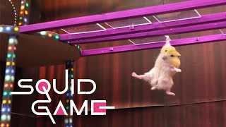 Squid Game vs Hamsterious: All Amazing Challenges