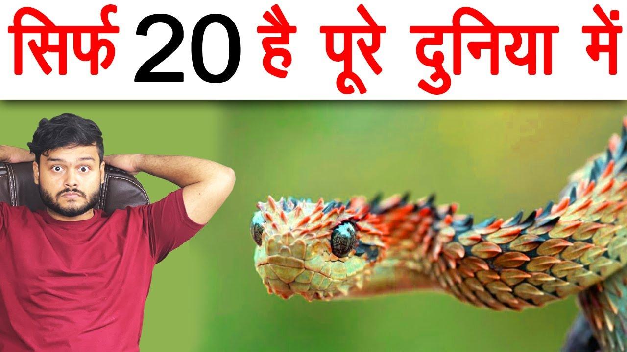 Download Sirf 20 Hai Pure Duniya Me - दुनिया के सबसे Rare साँप - Snakes & Various Random Facts - TEF Ep 143