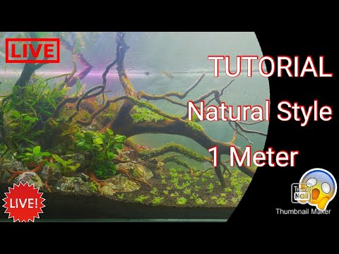 setting-aquascape-natural-1meter-tutorial