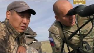 Охота на волка и барана в Монголии