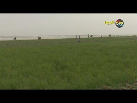 Deepto Krishi/দীপ্ত কৃষি - চরাঞ্চলের কৃষি/চাঁপাইনবাবগঞ্জ, পর্ব ২১৫