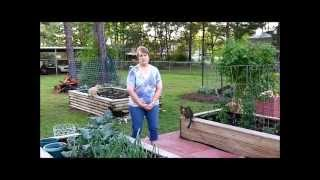 Gardening: Wifes Vegetable Box Gardens