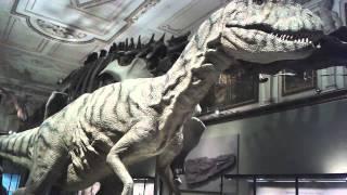 Dinosaurier Ausstellung / Naturhistorisches Museum / Wien