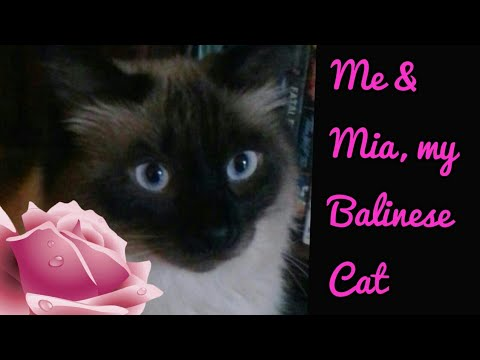Me & my Balinese Cat Mia