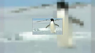 Mass starvation decimates Penguin colony's chicks