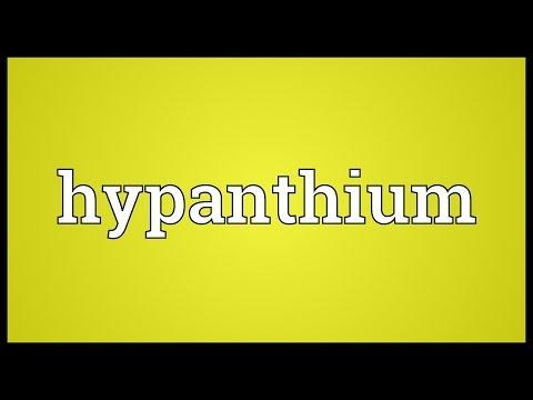 Header of hypanthium