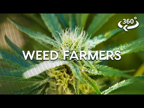 Weed Farming The California Way