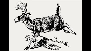How to draw standing white tailed deer drawing step by step