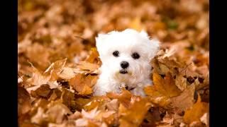 Самые красивые собаки в осеннюю пору/ Photo of beautiful dogs