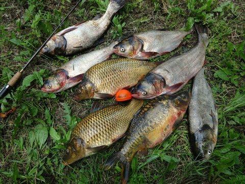 Рыбалка в Карташево. Пока лучшая в моей жизни/Папины брикеты/Папин технопланктон/