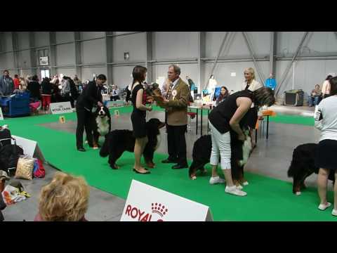 MVP Prague Expo Dog 16.4.2017 - pořadí