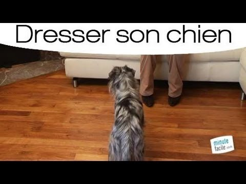 Dresser votre chien pour qu'il s'assoit - YouTube